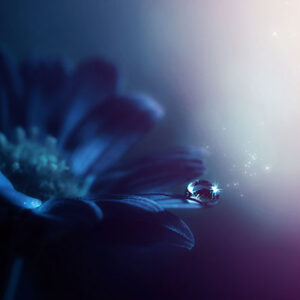 A single waterdrop on a blue flower